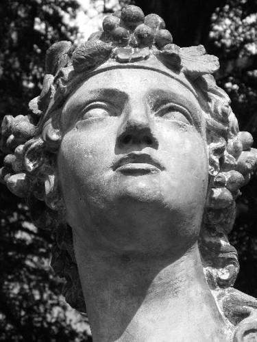 the_Dionysus_rose